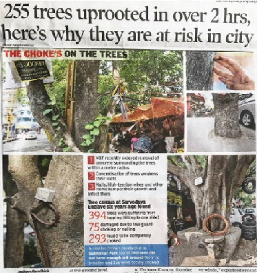 trees uprooted in over 2 hrs in delhi. help ndns expose the anti-environment activities. volunteer with us
